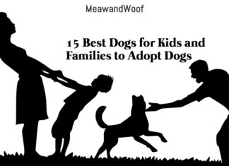 15 Best Dogs for Kids and Families to Adopt Dogs
