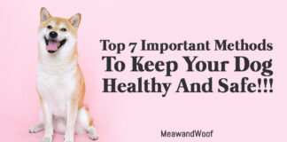 Top 7 Important Methods To Keep Your Dog Healthy And Safe!!!